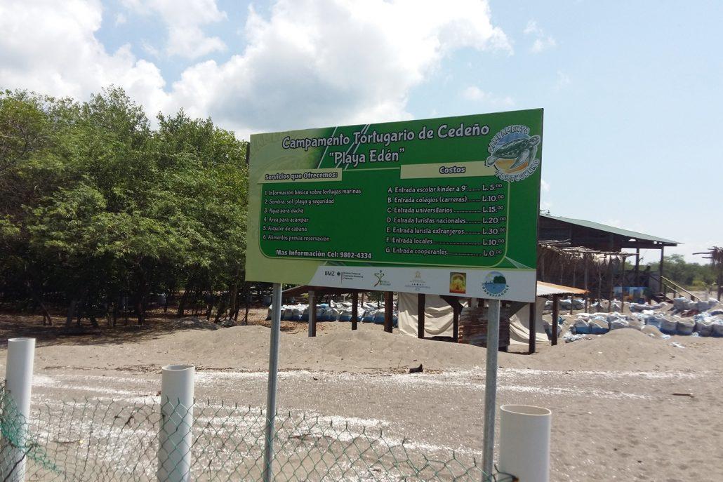 Lufussa-apoyando-proyecto-conservacion-tortuga-golfina-2