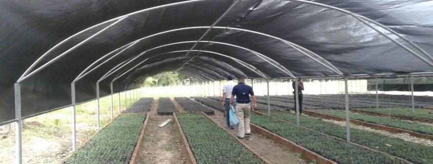 Primeros 200 mil árboles ya crecen en el vivero construido por Lufussa e ICF