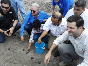 Lufussa attends to an Olive Ridley Sea Turtles release event